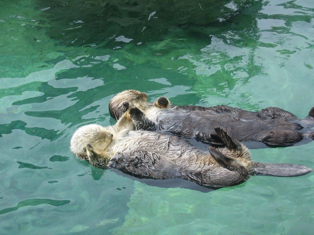 sea-otters-1